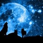5.- Wolf-Insight